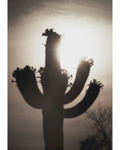 Saguaro Sunrise #10