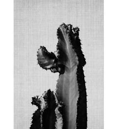 Cactus On Grey 2