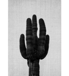 Cactus On Grey