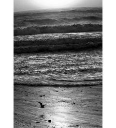 Pacific Ocean Seascape #22