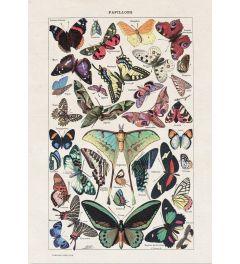 Vintage Vlinders