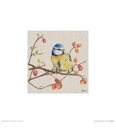 Pimpelmees Art Print Jane Bannon 30x30cm