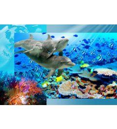 Dolfijnen 4-delig Fotobehang 368x254cm