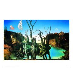 Dali Reflections Of Elephants Kunstdruk 60x80cm