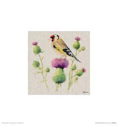 Putter op Distel Art Print Jane Bannon 30x30cm