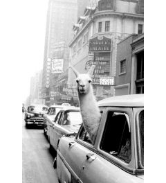 A Llama In Times Square Poster 61x91.5cm