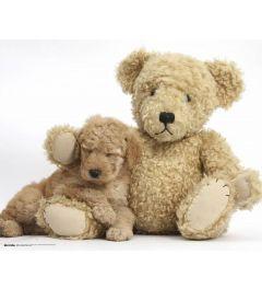 Golden Puppy With Teddy Bear