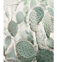 Cactus Poster 40x50cm