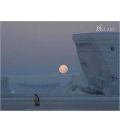 Keizer Pinguin bij Volle Maan