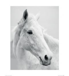 Nordic Horse II Art Print Ian Winstanley 40x50cm