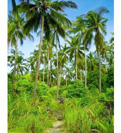 Palmbomen Poster 40x50cm