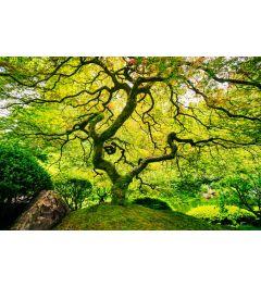 Japanse Esdoorn 7-delig Fotobehang 350x260cm