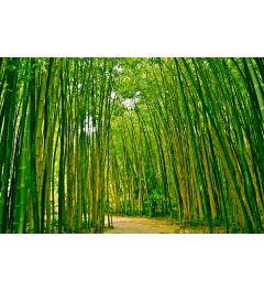 Bamboe Bos 7-delig Fotobehang 350x260cm