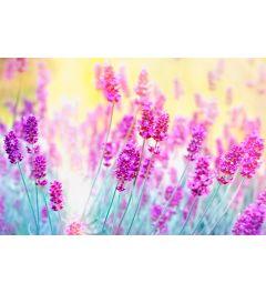 Lavendel 7-delig Fotobehang 350x260cm