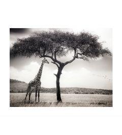 Giraffe Op De Savanne Kunstdruk