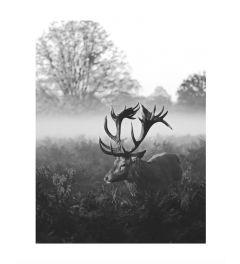 Hert Zwart-Wit Kunstdruk