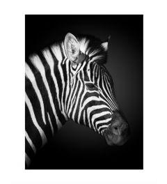 Zebra Kunstdruk