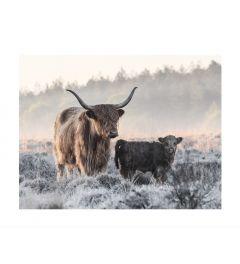 Schotse Hooglander Met Kalf Kunstdruk