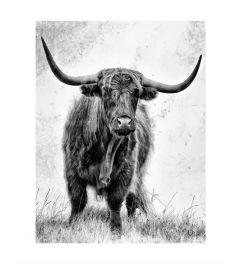 Schotse Hooglander Zwart-Wit Kunstdruk