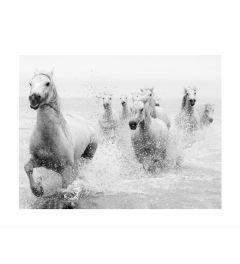 Rennende Paarden Kunstdruk