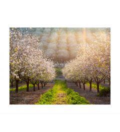 Blooming Fields Kunstdruk
