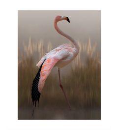 Flamingo Kunstdruk