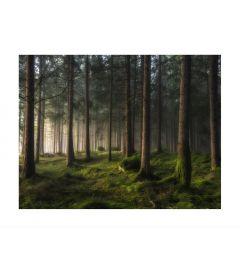Pinetree Forest Kunstdruk