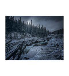 Icy Forest Kunstdruk