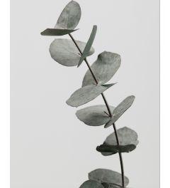 Eucalyptus 3 Kunstdruk