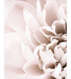 Chrysanthemum 1 Kunstdruk