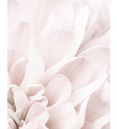 Chrysanthemum 2 Kunstdruk