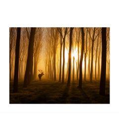 Hert In Het Bos Kunstdruk