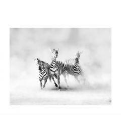 Rennende Zebra's Kunstdruk