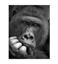 Gorilla Kunstdruk