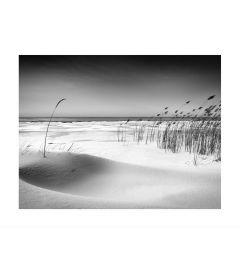 The Shore Kunstdruk