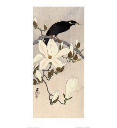 Ohara Koson Myna on Magnolia Branch Art Print 30x60cm