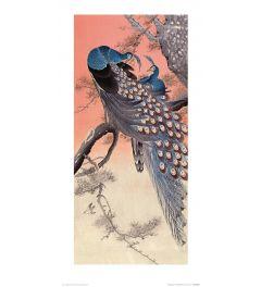 Ohara Koson Two Peacocks on Tree Branch Art Print 30x60cm
