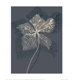 Ian Winstanley Stem Silhouette IV Art Print 40x50cm