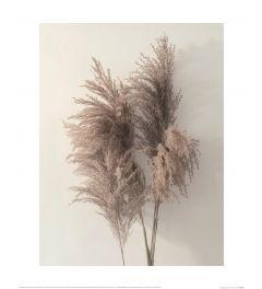 Ian Winstanley Pampus Grass I Art Print 40x50cm