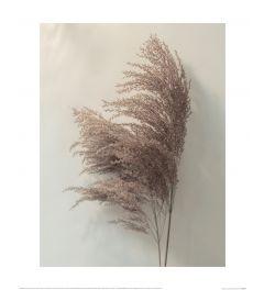 Ian Winstanley Pampus Grass II Art Print 40x50cm