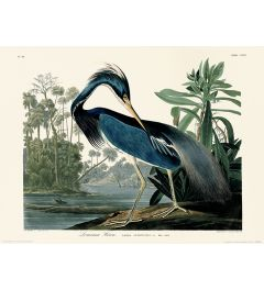 John James Audubon Louisiana Heron Art Print 30x40cm
