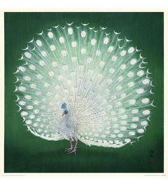 Ohara Koson Peacock Art Print 40x40cm