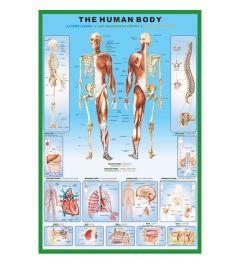 Het Menselijk Lichaam