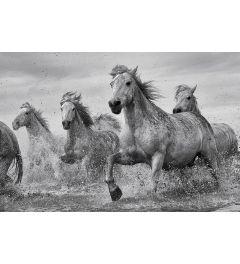 Camargue Paarden
