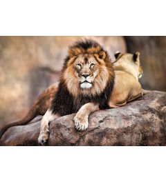 Leeuw - King of the pride