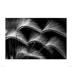Wuivende Graspluimen in Zwart-Wit Art Print Dennis Frates 60x80cm