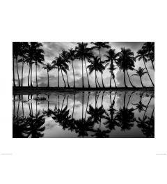 Palmbomen in Zwart-WitArt Print Dennis Frates 60x80cm