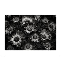 Bloemen in Zwart-Wit Art Print Dennis Frates 60x80cm