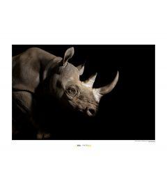 Neushoorn Art Print National Geographic 50x70cm