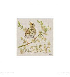 Lijster Art Print Jane Bannon 30x30cm